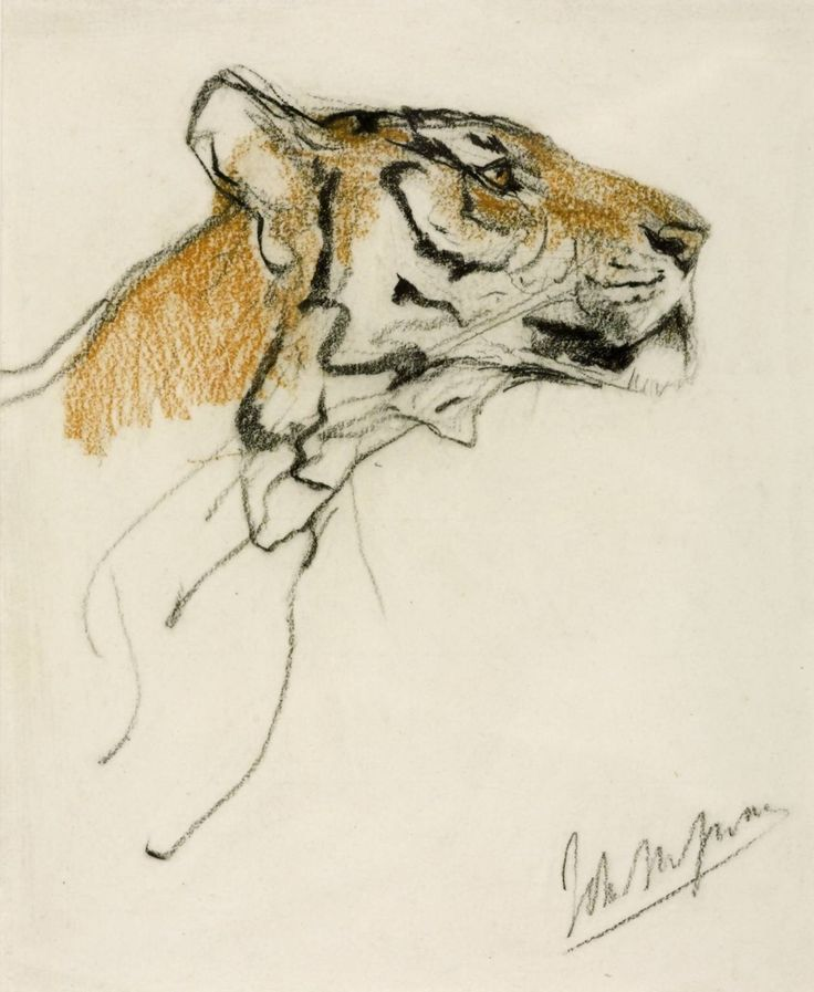 Tiger sketches byJohn Macallan Swan[British,...
