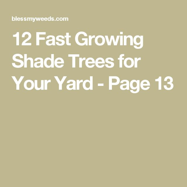 1000 Ideas About Fast Growing Shade Trees On Pinterest