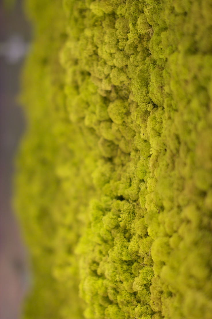 9 best Moss Wall images on Pinterest | Moss wall, Green and Green walls