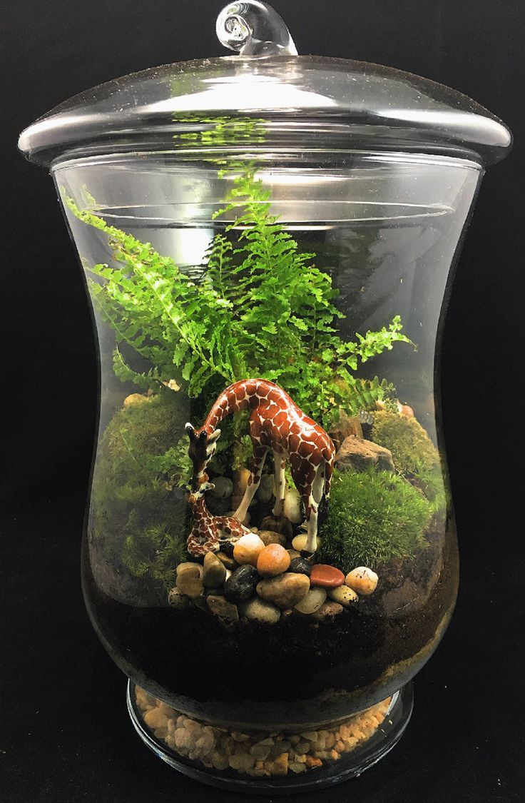 Pin By Kat Holewinski On Gardens In Glass Pinterest Terrarium