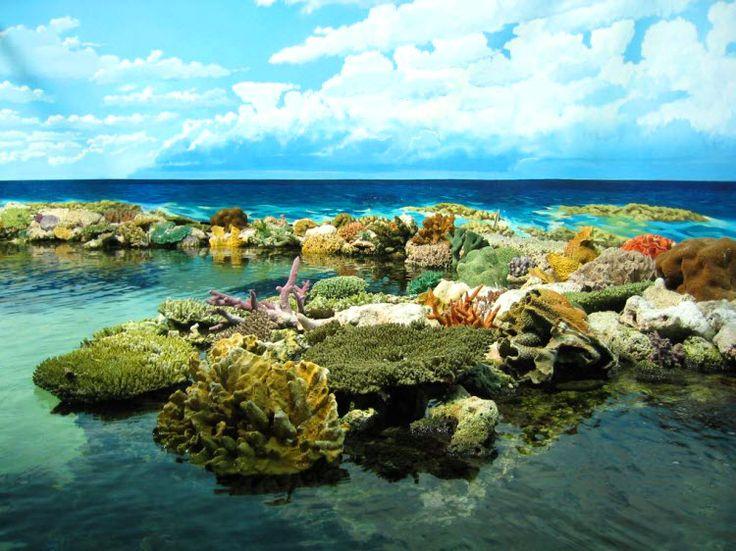 Great Barrier Reef (2)