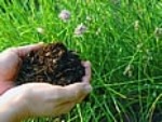 This page is about how to make compost, including information about the composting process, materials to compost, composting with leaves, and...
