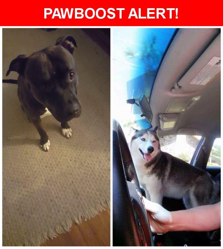 Please spread the word! Anubis was last seen in Jacksonville, FL 32210.    Nearest Address: Near Blanding Blvd & Cedar Forest Dr N
