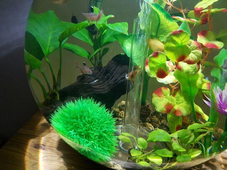 Biorb fish tank 30l