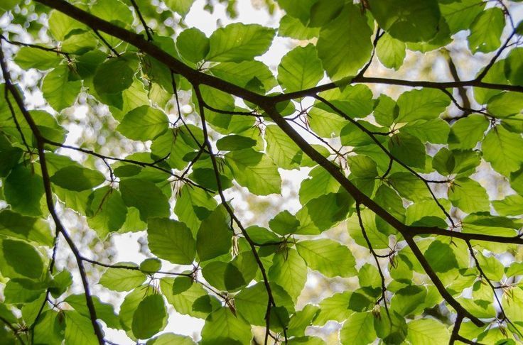 Autumn is Here: The Most Efficient Methods to Deal with Leaves