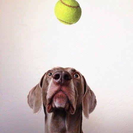 """I believe in Dog (en attendant Dogot, Godot pour les nuls, """"l'infini à la portée des chiens"""")"""