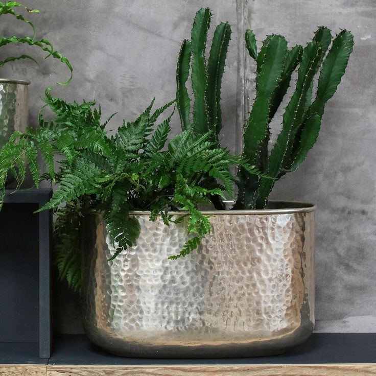 Silver Planter: 47 Best Garden Planters & Planting Ideas Images On