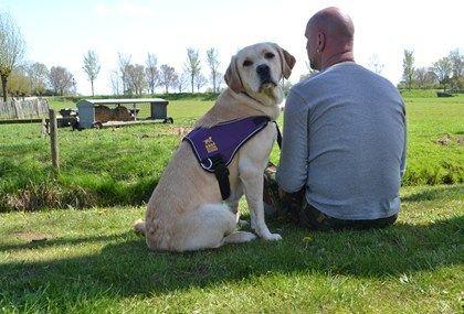 Onze honden zijn speciaal getraind voor een belangrijke taak zoals het bieden van steun aan (oud-) geüniformeerden met PTSS. Lees meer over de buddyhond.