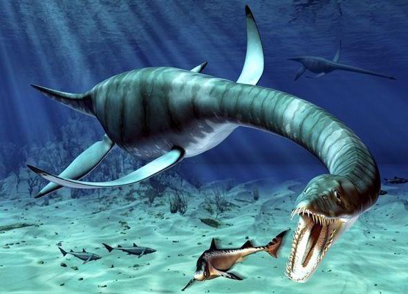 Житель Северной Каролины обнаружил на озере «лох-несское» чудовище