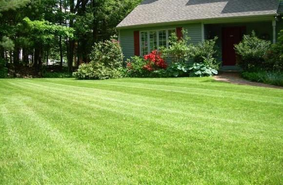 This Reliable Leaf Removal Business Provides A Variety Impressive Lawn Care Services They Do Mulching Over Seeding Trimming Mowi Lawn Care Lawn Edging Lawn