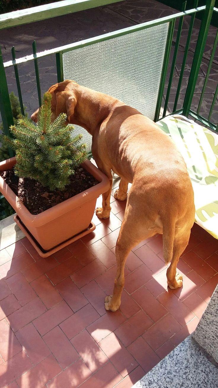 Ramon curiosa sul balcone