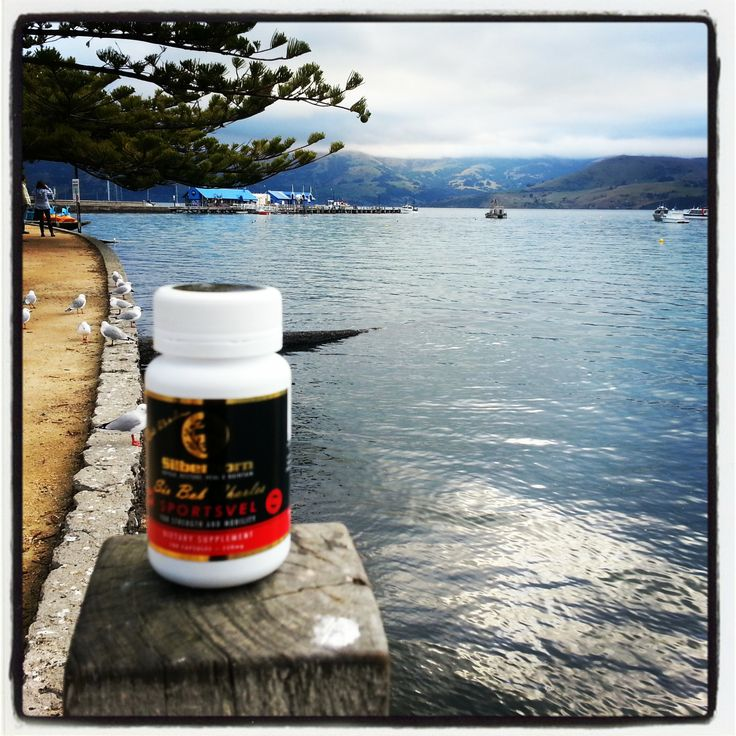 Silberhorn Sportsvel  Velvet antler capsules are superior quality natural velvet antler supplement made from whole stick New Zealand Velvet antler which is used to support joint health and mobility, for visit us at www.silberhorn.co.nz   #velvetantler #silberhorn #sportsvel  #jointpain #velvetantlercapsules #jointhealthsupplements #jointhealthproducts #jointpainsupplements #deervelvet #deervelvetcapsules #deerantlervelvet #nzdeervelvet  #igf1 #igf-1
