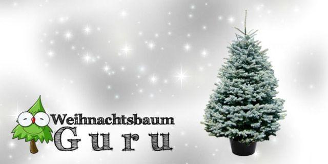 Weihnachtsbaum kaufen leicht gemacht - einfach online bestellen und Weihnachtsbaum liefern lassen. Besonders günstiges Angebot für Edeltanne via dailydeal mit großem Rabatt