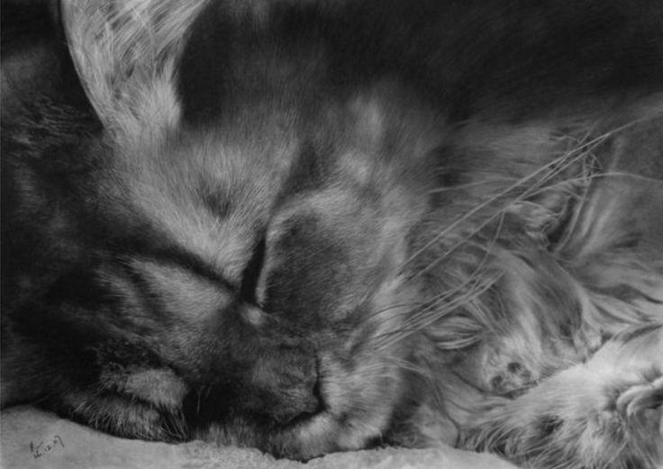 Удивительные рисунки в карандаше: Пол Лунг и его кошки - Ярмарка Мастеров - ручная работа, handmade