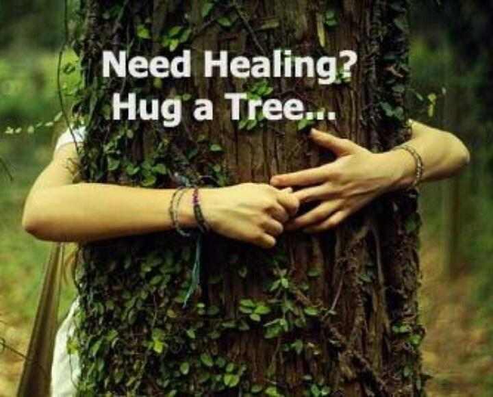 Hug A Tree Tree Hugger Healing Hugs Tree