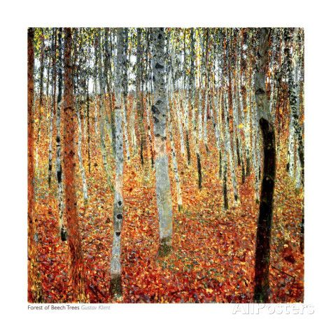 Forest of Beech Trees, c.1903 Prints by Gustav Klimt - AllPosters.co.uk
