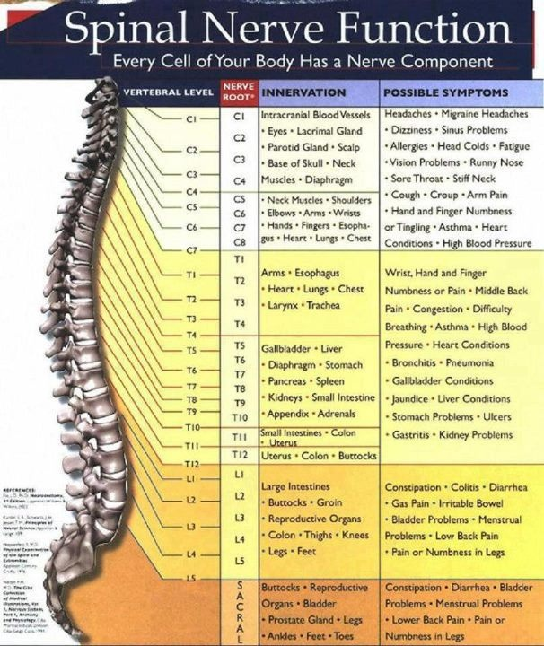 If your spine is out of alignment, a nerve will be pinched causing the symptoms in the right column. Maximized Living Docs can straighten spine & help body heal itself & function at 100%, the way God intended.  The human body is so amazing!! www.maximizedliving.com