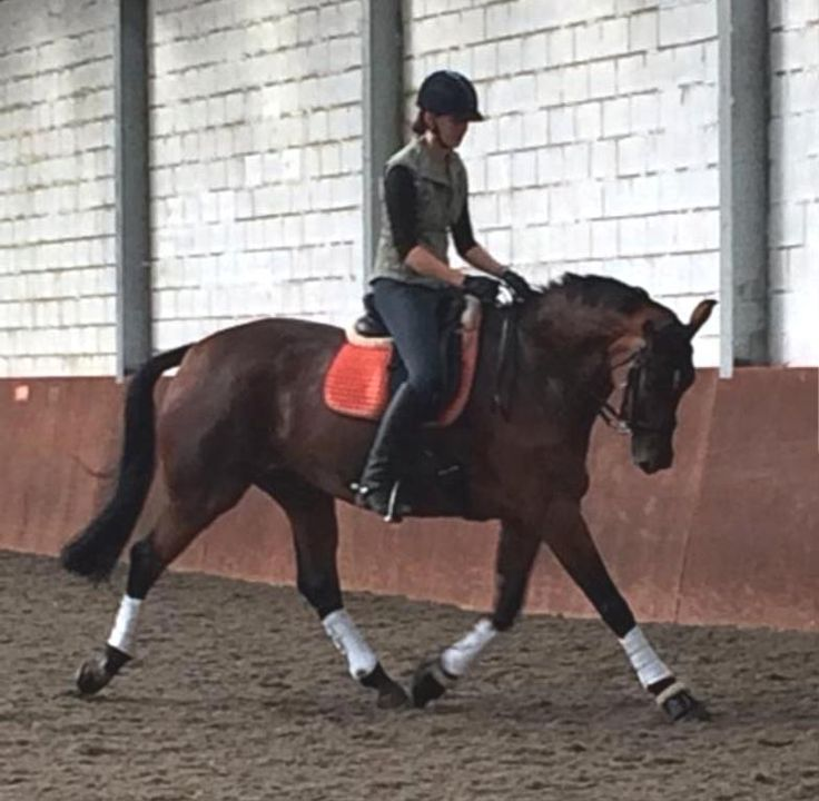 Keep up to date with the Lofthouse Equestrian blog for all new stories!