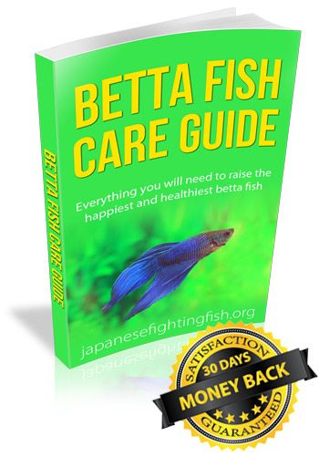 how to take care of a betta fish tank