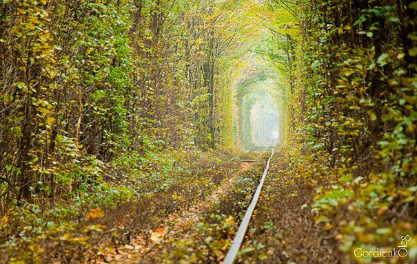 by Oleg Gordienko | Tunnel Of Love | Ukraine | Although it's undoubtedly romantic, there is an active train that travels through the tunnel three times a day to deliver wood to a factory.