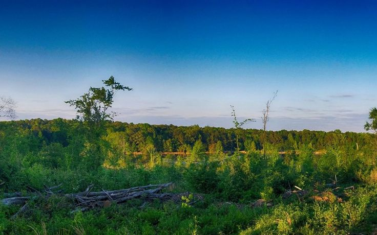 Home and Hunting Land for Sale in Banner, MS