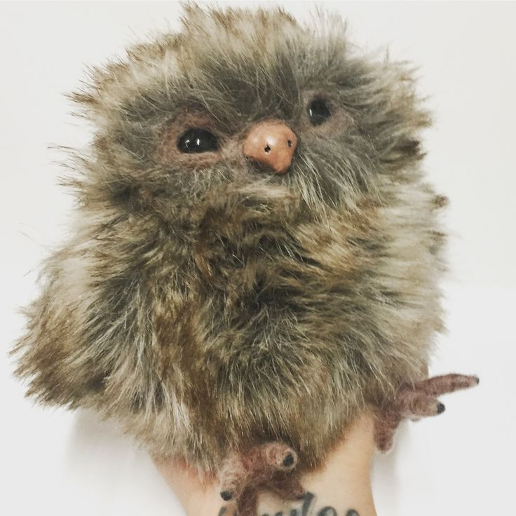 Little Brown Owl 🦉