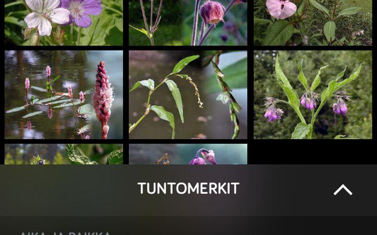 NatureGate on mainio apuväline lajien tunnistamiseen.
