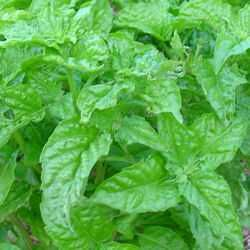 Maybe you blanched at the price of fresh herbs in the produce section this spring, or you were seduced by a bright pot of basil at your local nursery, and you thought, ?Hey! This year, I will grow ...