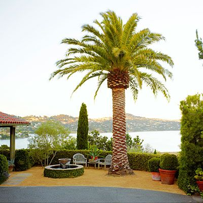 Anchor a gorgeous view with a focal point like this Canary Island date palm (Phoenix canariensis).