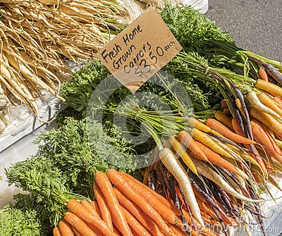 Bunches of fresh home grown orange carrots with green leafy stems for sale on a market stall.