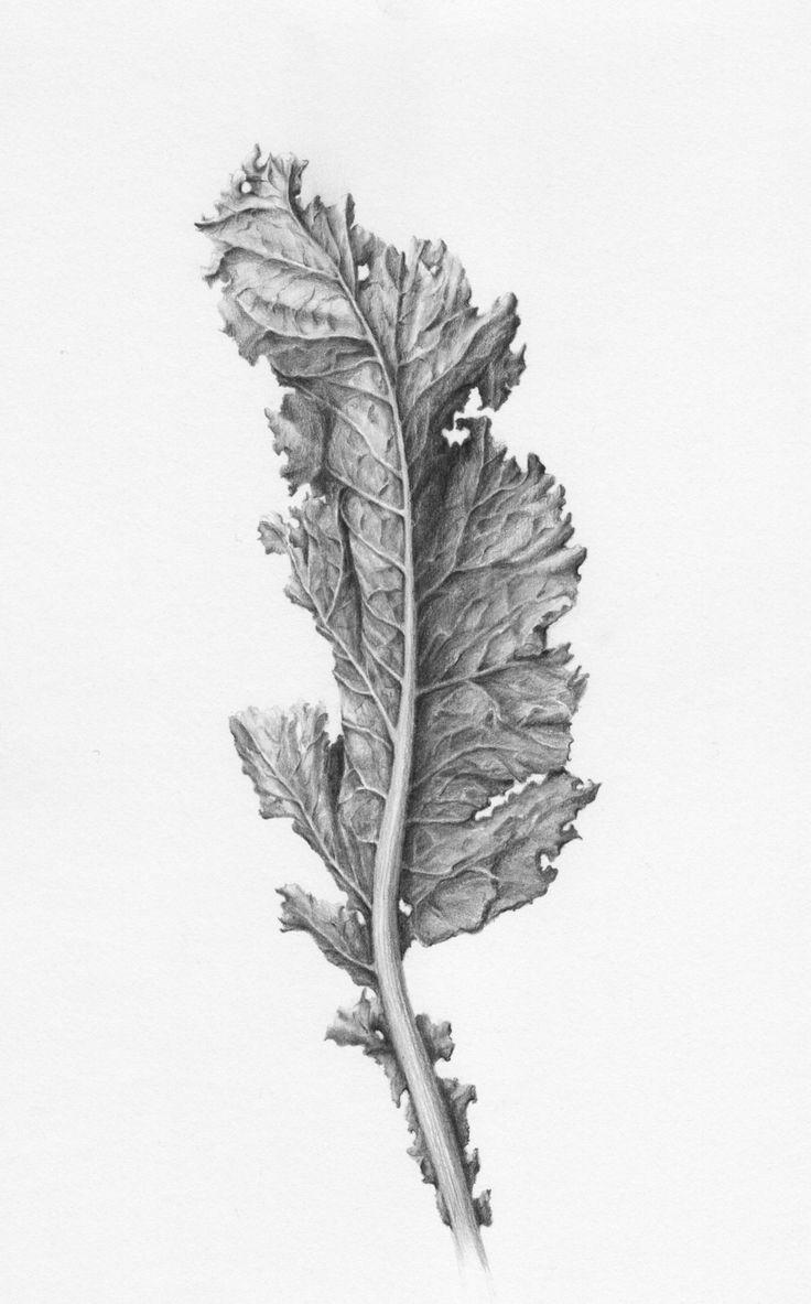 SHADES OF GRAY   Botanical Drawings in Graphite by Eva-Maria Ruhl