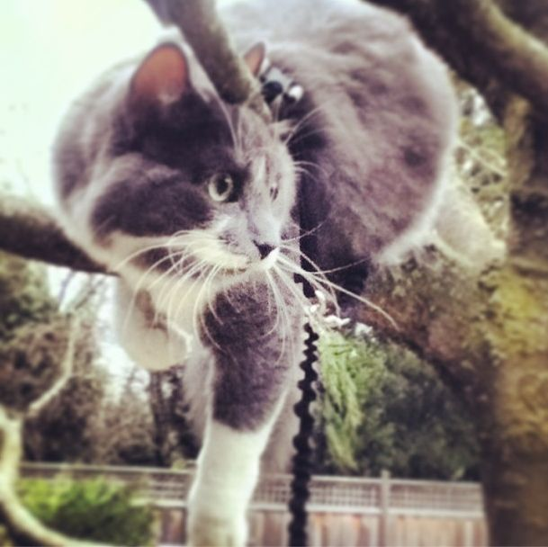 Rocky on his leash in the tree in our backyard. ( Well old one )