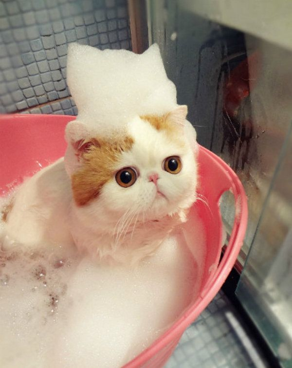 Bildergebnis für cute kitten bath
