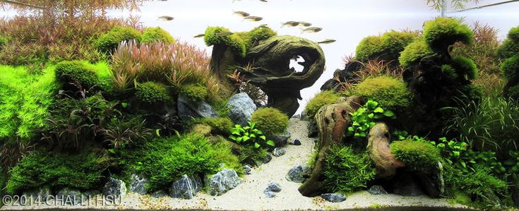 2014 AGA Aquascaping Contest - Entry #88 200L