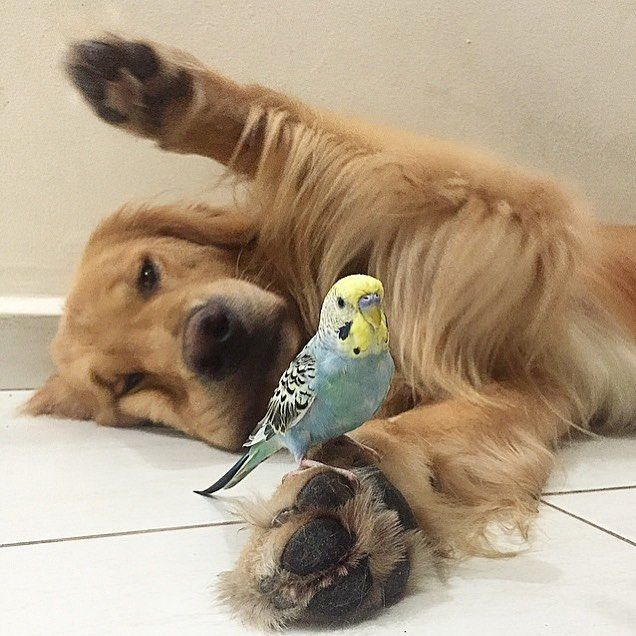 17 Best Images About Pins For Pets On Pinterest: 17 Best Images About Friends With Benefits On Pinterest