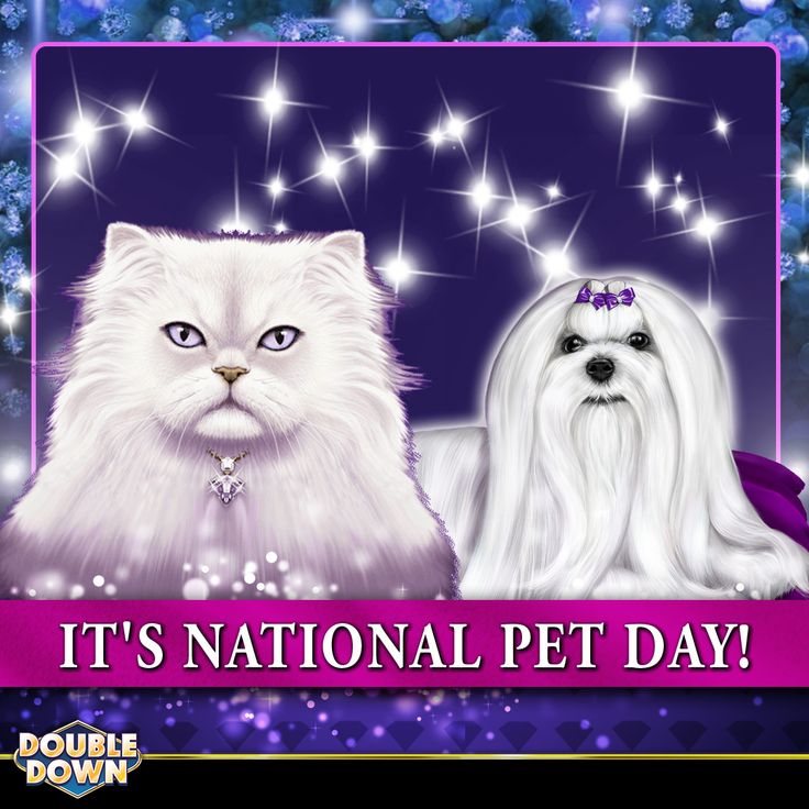 (EXPIRED) It's National Pet Day! Give your furry family members some extra cuddle time today, then claim 200,000 FREE chips when you tap the Pinned Link (or use code KQPGJR)