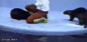 Gif Animaux drôles (420)                                                       …