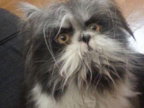 Očný klam rozpútal obrovskú debatu: Ľudia sa nemôžu zhodnúť, či je toto pes alebo mačka