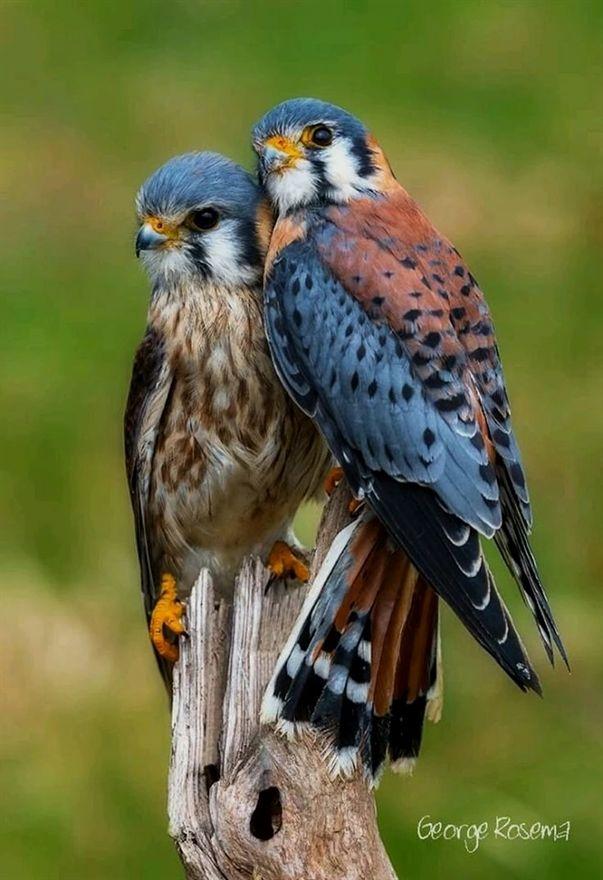 #bird scooter,  birds preening,  birds 0x a presses,  birds of passage trailer e…