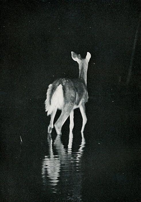 ...: Wild Animal, Photos, Animal Kingdom, Deer Hunt'S, Bambi, Posts, Black White, Doors Photography, Beautiful Photography