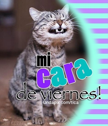 Mi cara de #viernes #gatos #tarjetitas #humor