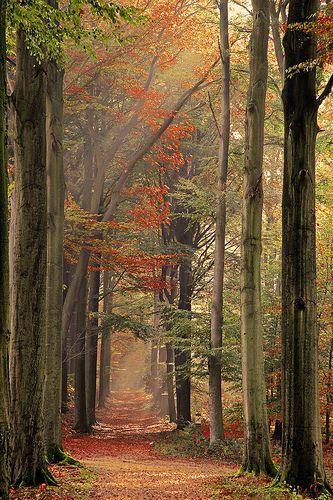 A través del bosque otoñal.
