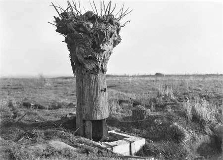 DummyTreeHill63Messines1917 - Battle of Messines (1917) - Wikipedia