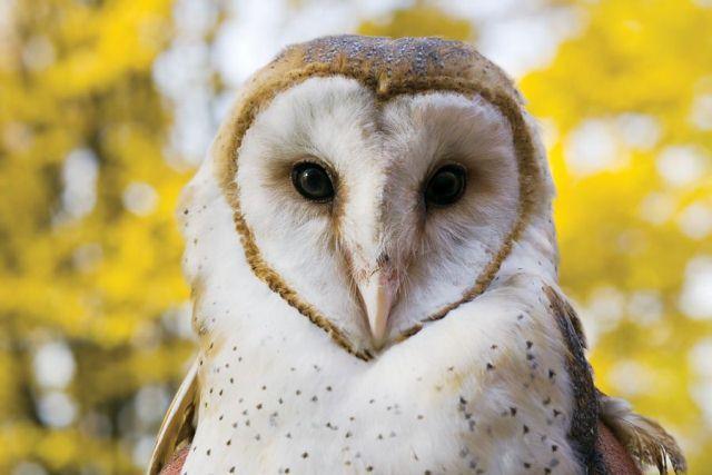 Soetedjo Wisata Gratis ke Luar Negeri Karena Burung Hantu
