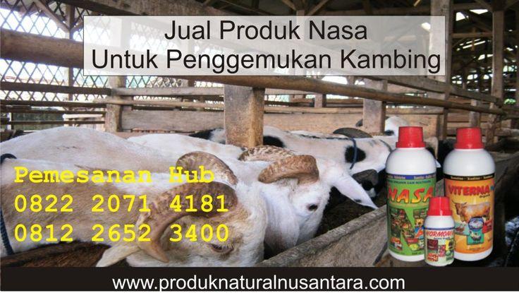 Jual Produk Nasa Untuk Penggemukan Kambing. Produk Nasa Untuk Kambing. Produk Nasa Untuk Ternak Kambing, Jual Produk Nasa Untuk Kambing Hub 081226523400