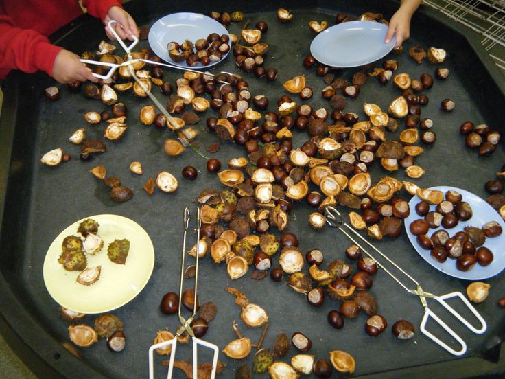 Lots of conkers and conker shells with assorted 'tongues' to pick them up with - dev. fine manip. skills