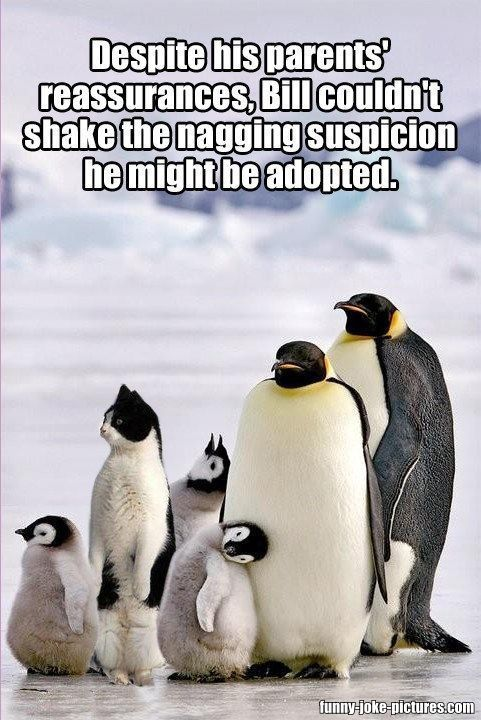 b260ea98101b763db7e5be69eeb3674a 10 best images about random on pinterest cats, funny and funny,Cute Penguin Meme