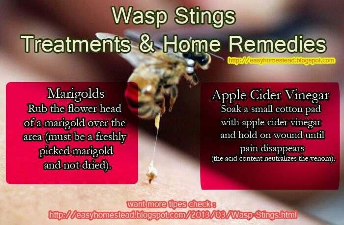 Natural Remedy For Wasp Sting