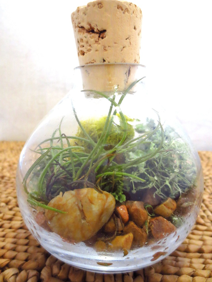 17 best images about mini terrarium and desktop gardens on