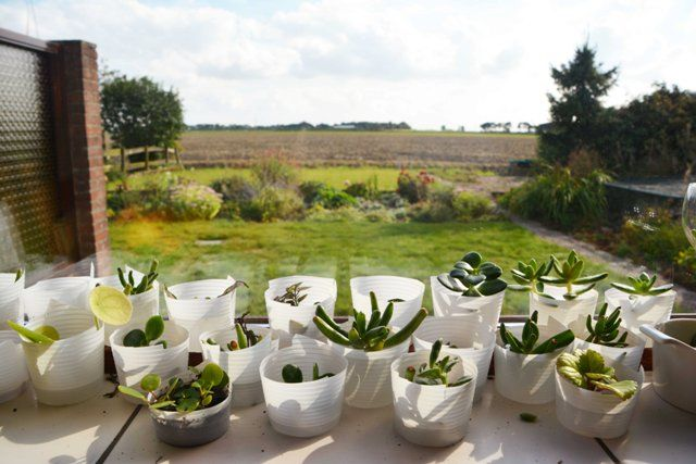 growing plant cuttings! These baby plants enjoy the sun and the view!